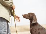 Devenir éducateur canin : le brevet professionnel éducateur canin