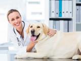 Tarifs : combien coûte le vétérinaire