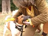 Une journée avec Franck Philip, éducateur canin