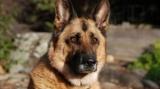 Palmarès  2012 des chiens préférés des français