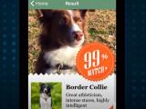 Fetch, une nouvelle application pour identifier les chiens que vous croisez