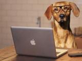 Les races de chiens les plus intelligentes