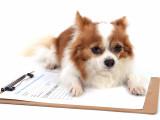 Règles concernant les documents généalogiques des chiens