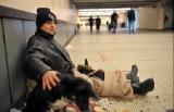 Belgique - chiens : Les animaux souffrent aussi du froid