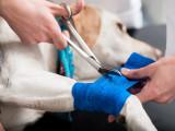 En cas d'accident, les gestes qui peuvent aider votre chien