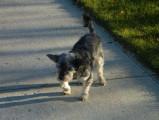 Que faire si mon chien boite ?
