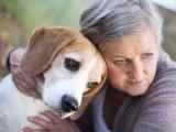 Identifier le cancer chez le chien