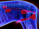 Les problèmes de Prostate chez le chien
