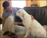 Animaux : Chiens - La médecine traditionnelle chinoise pour les chiens