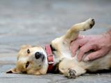Usa - Comment masser son animal dans le sens du poil