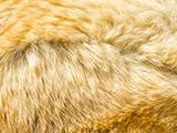 Soigner la démodécie canine & pyodémodécie par la médecine naturelle