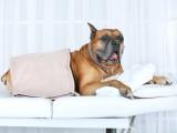 Pourquoi faire faire de la kinésithérapie à mon chien ?