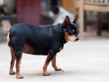 Comment éviter le surpoids ou l'obésité chez le chien