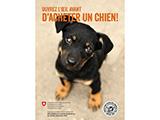Suisse -  deux nouvelles brochures de l'Office vétérinaire fédéral (OVF)