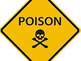 Ces poisons que votre chien peut croiser au quotidien