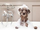 Hygiène et soins du chien