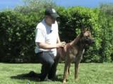 Brosser et panser votre chien au quotidien