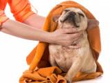 Comment entretenir le pelage de son chien ?