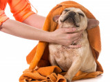 L'entretien du poil du chien : entretenir et nettoyer le pelage de son chien