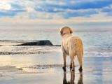Les chiens et la baignade