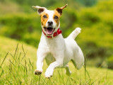 Les bonnes résolutions pour un chien heureux et en bonne santé