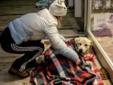 En Turquie, des magasins accueillent les chiens errants victimes du froid