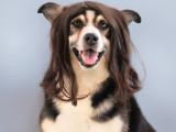 Le pelage du chien : composition du poil, croissance, mue...