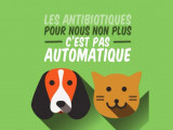 Les antibiotiques pour les chiens