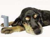 L'asthme chez le chien : causes, symptômes et traitement