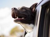 10 façons de savoir si son chien est en bonne santé