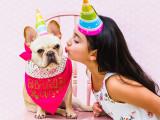 L'âge du chien : tableau d'équivalence