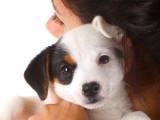 Croissance du chiot : conseils pour aider son chien à bien grandir
