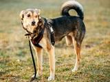 Éduquer un chien handicapé