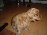 Canada - Plus de 500 chiens et chats euthanasiés en 2008 à Val-d'Or