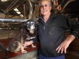 Maggie, le plus vieux chien du monde, vient de mourir à l'âge de 30 ans