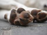 Décès d'un chien : enterrement, incinération et cimetières pour chiens