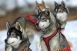 ADN :  le monde du chien mène l'enquête