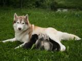 S'occuper de chiots de la naissance à deux mois