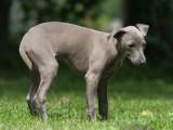L'occlusion intestinale du chien : causes, symptômes, traitement...