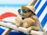Le coup de soleil chez le chien