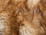 La pyodermite chez le chien