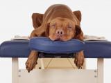 L'ostéopathie canine