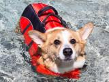 L'hydrothérapie pour chien