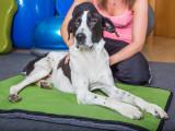 Ostéopathie animale est enfin reconnue