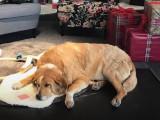 Des aires de repos pour chien dans un magasin IKEA
