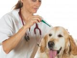 Vermifuger son chien : pourquoi, quand et comment ?