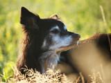 12 conseils pour augmenter l'espérance de vie de son chien