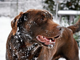 Protéger son chien contre le froid en hiver