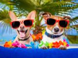 Prévenir les problèmes et risques de l'été pour son chien
