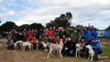 chiens courants sur les terres de Serraggia